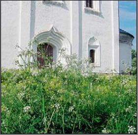 Суздальская архитектура с природой в родстве.